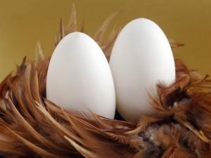 Dos huevos sobre plumas de pato