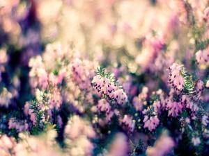 Flores en un arbusto