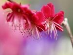 Flores fucsias en una rama