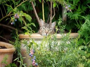 Gato dentro de una gran maceta