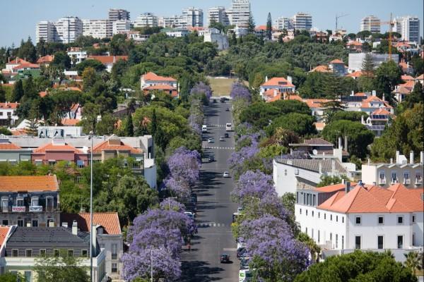 Árboles entre las casas y calles de una ciudad