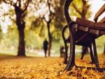 Hojas otoñales en un parque