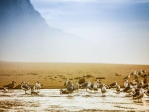 Gaviotas en la orilla de una playa