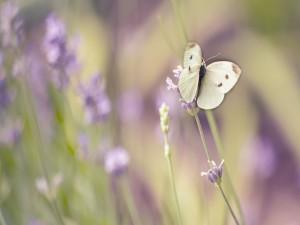 Mariposa sobre una pequeña flor