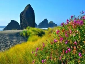 Flores y hierba junto a una hermosa playa