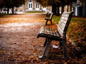 Día de otoño en el parque