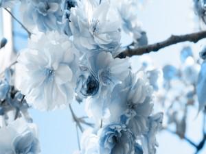 Hermosas flores en una rama