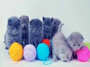 Gatitos jugando con unos ovillos de lana