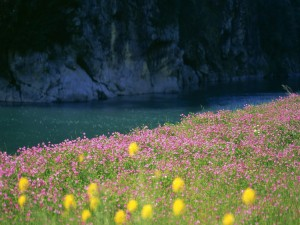 Flores primaverales junto a un río