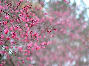 Árboles floreciendo en primavera