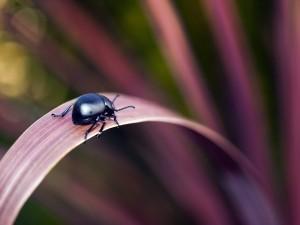 Escarabajo negro caminando por una hoja