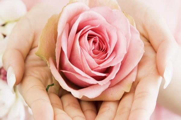 Manos sosteniendo una rosa