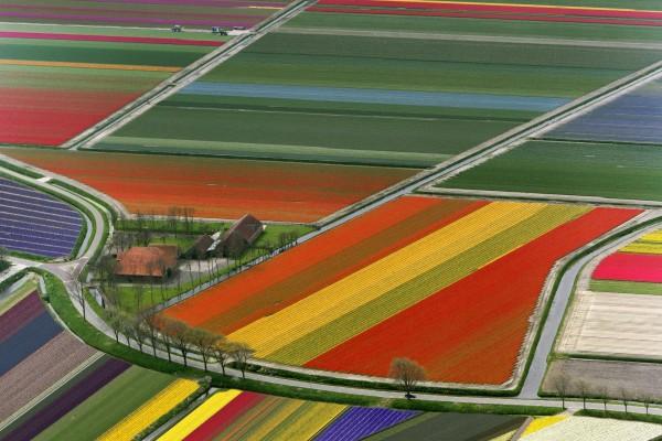 Vista de un gran campo de flores