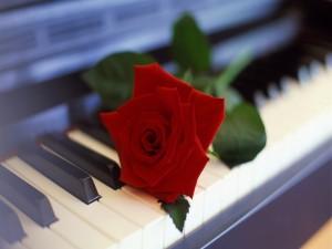 Rosa roja sobre las teclas de un piano
