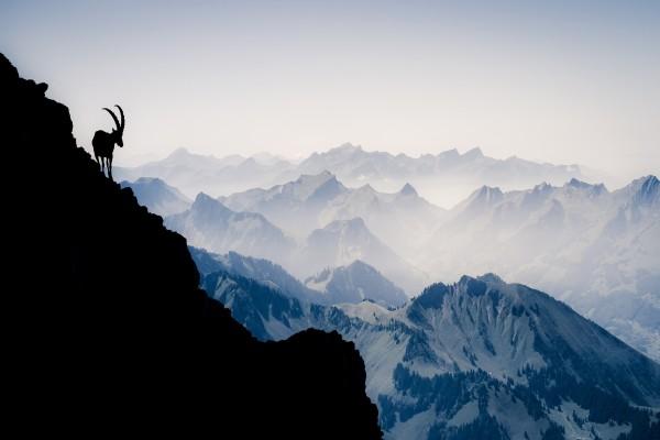 Silueta de una cabra en las montañas