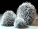 Tres esferas cubiertas de pinchos finos