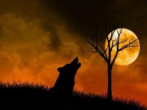 Lobo sentado en la hierba aullando a la luna