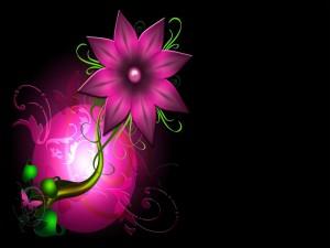 Flor rosada sobre un fondo negro