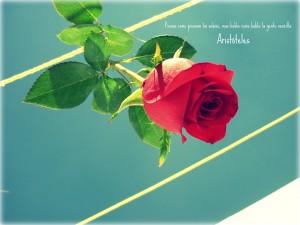 Frase de Aristóteles junto a una rosa