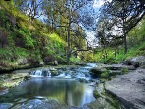 Árboles junto al cauce de un río