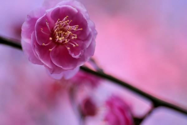 Flor rosa en una rama