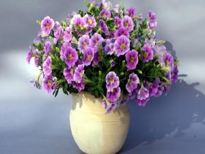 Bonitas flores en una maceta