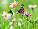 Mariposa sobre una brizna de hierba