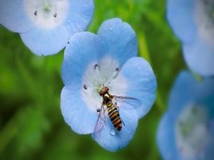 Gran abeja posada en una flor azulada