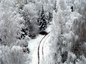 Vista de un paisaje nevado