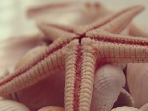 Estrella de mar sobre unas conchas
