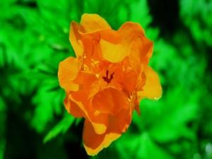 Una solitaria flor amarilla