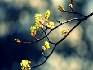 Brotes en una rama