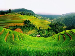 Plantación en unas montañas
