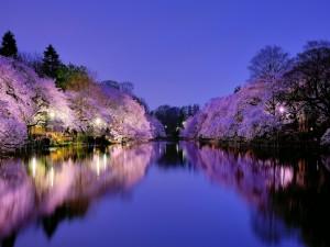 Hermosos árboles en flor reflejados en el agua