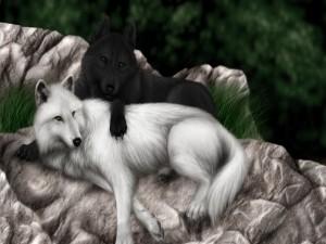 Lobo negro junto a un lobo blanco