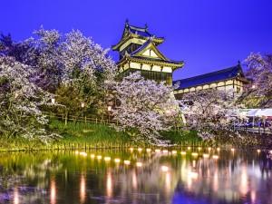 Cerezos en flor junto a un edificio japonés