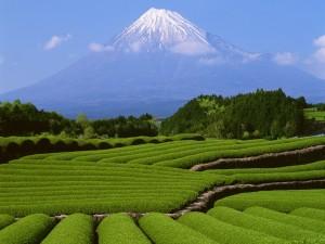 Hermosa vista del Monte Fuji