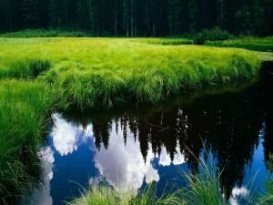 Nubes y árboles reflejados en un río