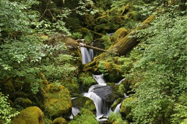 Pequeña cascada oculta tras la rocas y la vegetación