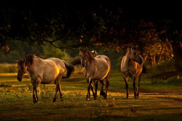 Caballos caminando sobre un pastizal bajo la sombra de unos árboles