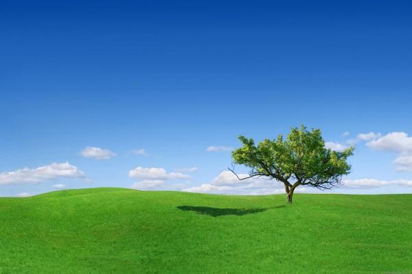 La sombra de un árbol sobre la verde hierva