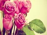 Rosas de color rosa recién cortadas