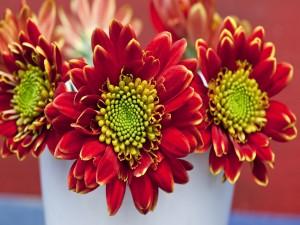 Tres grandes flores con pétalos rojos