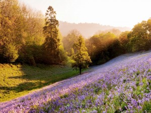 Un hermoso campo en primavera