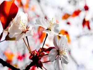 Flores frutales en una rama