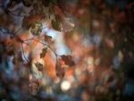 Hojas otoñales en las ramas de los árboles