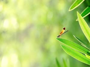 Libélula sobre una hoja verde