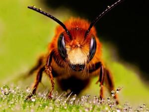 Pequeñas gotas de agua sobre una abeja