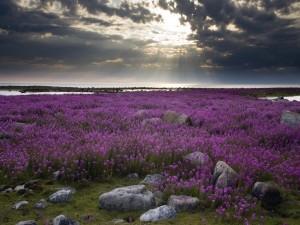 Nubes sobre un hermoso campo con flores lilas