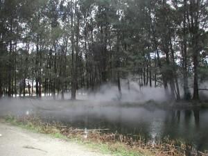 Niebla entre los árboles y el río